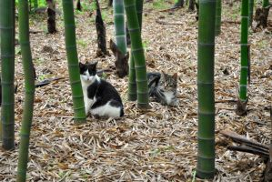 Bamboo Cats by n1ghtmar1shwaltz