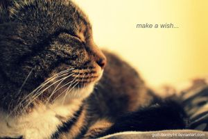 Make a wish... by sisselPhotography