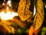 Leaves.III. by fumdetigara