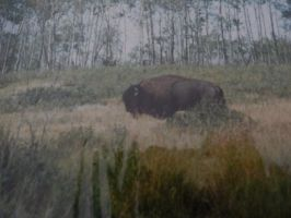 Lone Bison by Sanluris