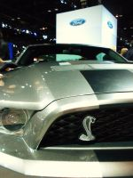 New Mustang Shelby by escritara
