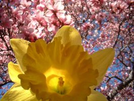 Yellow amongst the pinkness by raverqueenage