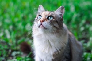 Cat looks by Anna-Belash