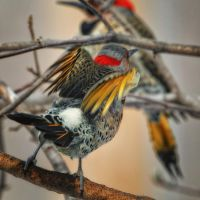 Flicker Love Song by clippercarrillo