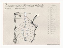 Comparative Forelimb Study by Novastar2486