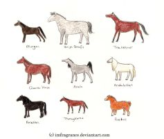 Horse and Pony Breeds 2 by imFragrance