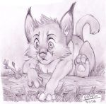 Young Caracal by Paint201