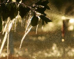 december freeze by sandpiper764