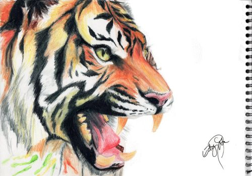 Watercolor tiger by Dracospire