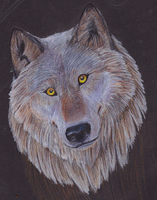 Grey Wolf by Forbidding