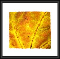 Autumn Stained Glass 2 by jgrockphotos
