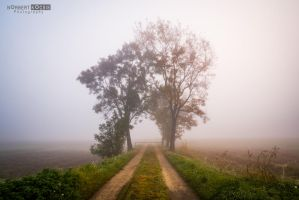 Fog guards the road by NorbertKocsis