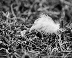 Feather by Kahnave