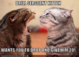 Drill Sergeant Kitteh by DemonSpawn12