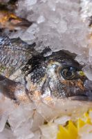 Fish in Borough Market London by JSWoodhams