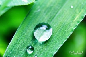 Droplets on grass by mjwrightarts