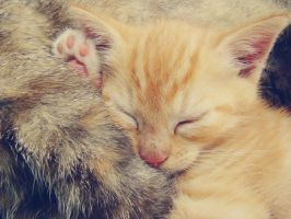 sleeping baby kitty.03 by na-tala