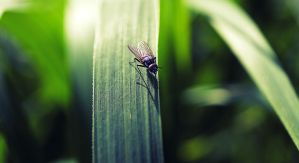 fly on a leaf by donnosch