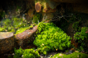 Rust and moss by GrauWeiss