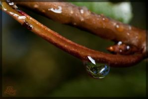 Water drop by lukaszpicur