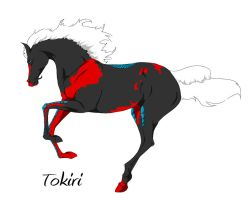 CH Tokiri by Everland-Stables