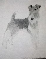 Fox Terrier by PonderosaPower