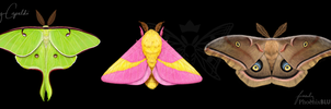 Luna, Rosy Maple, and Polyphemus Moths by MaryCapaldi