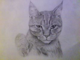 Our cat Leo by SARGY001
