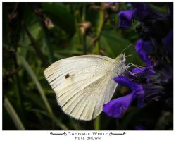 Cabbage White by BioToxxx