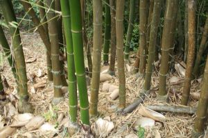 Bamboo XIV by KW-stock