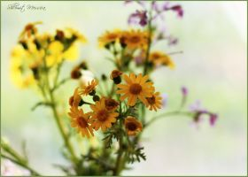 Simple wild flowers 2 by ShlomitMessica