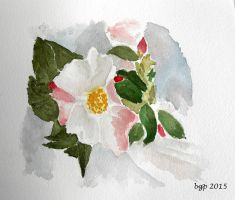 Camelia by manette64