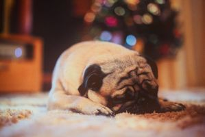 Christmas pug by Yanagl