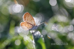 Crazy Bokeh by diensilver