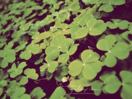 in search of a 4-leaf clover by ixoria