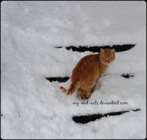 719 by evy-and-cats
