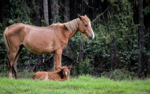 Wild Horse 3 by AnneMarks