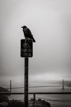 The Raven and the Golden Gate Bridge by Gwangelinhael