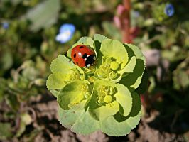 Ladybird by francy93