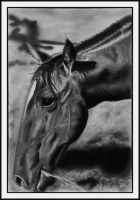 Charcoal Horse by Ihabiano
