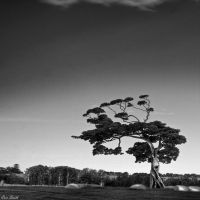 Twisted Tree by engridearty