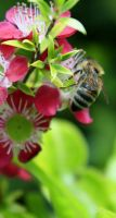 Bees 1 by Coraloralyn