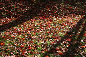 Red Leafs 1 by Aqua-Designs