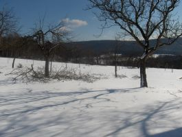 Icy Appletrees by Andecaya