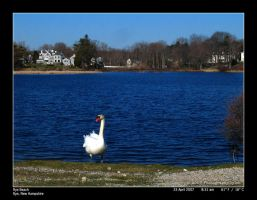 Holy Crap, Swans by PhotographyByIsh