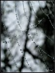 Dew Drops and Webs by irish-eyes2