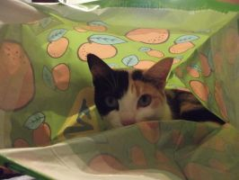 R.I.P LILLY PICKLES, A TRUSTY CAT by Sweet-vicci