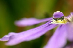 .: Purple droplet :. by Katosu