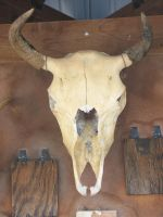 Cow Skull by Stock-By-Smokey