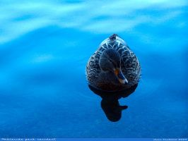 Ambleside park resident by rlcwallpapers